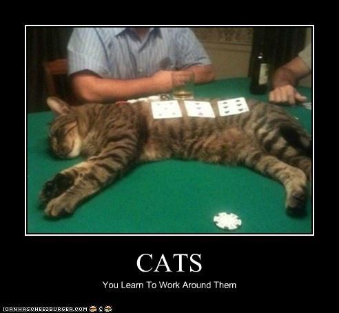 cat poker